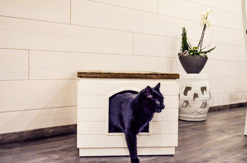 Semarang cat litter box